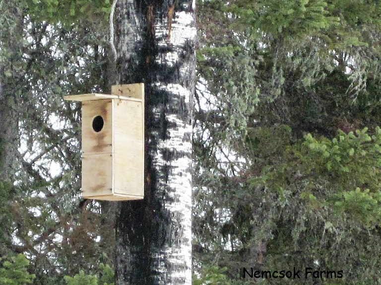 Natural pest control with Build It: Owl Houses
