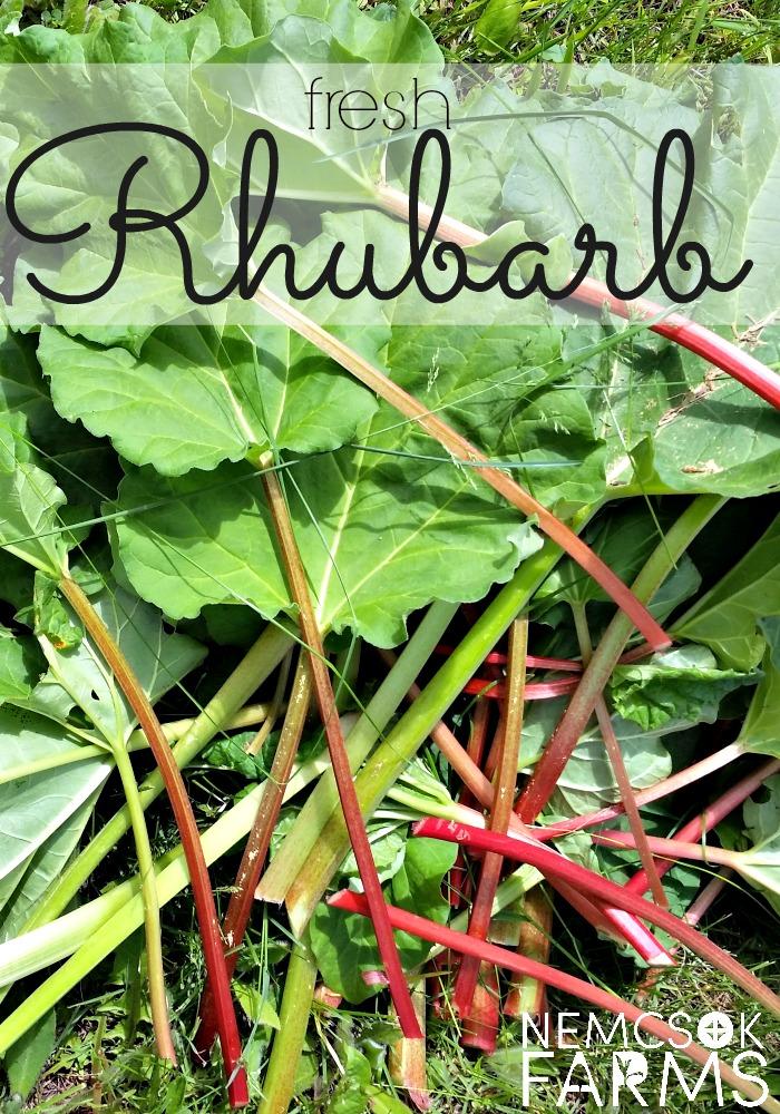 Fresh Rhubarb Gardening Growing and Maintenance Tips