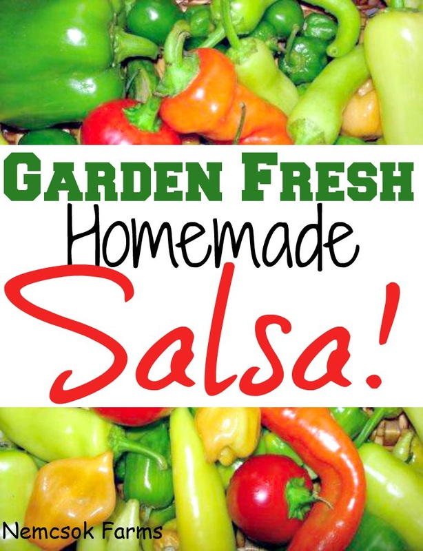 Whe the tomatoes are ripe, make garden fresh homemade salsa recipe to get the most out of your garden. Kids can help too! But caution no one step for little helping hands! Homemade salsa can be stored for years when canned correctly.