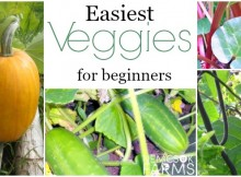 Easiest Veggies You Can Grow - EVER.