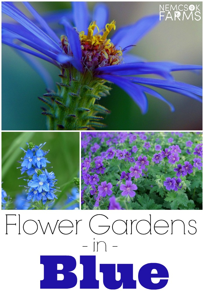 Blue Flowers for Your Garden