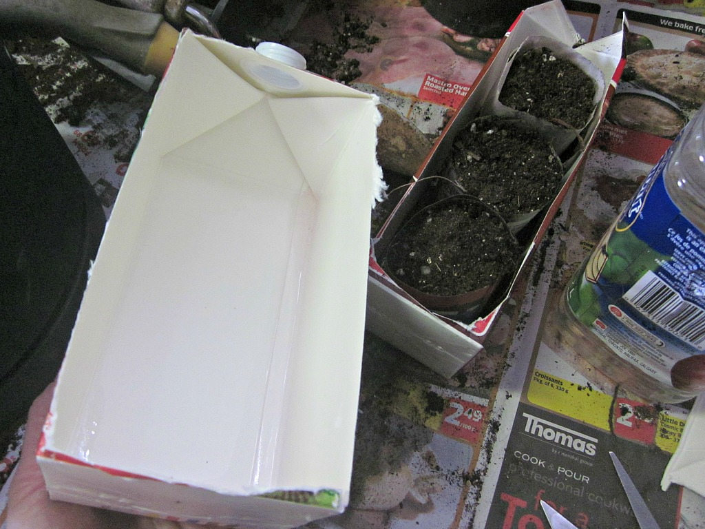 Juice and Milk Cartons make great plant trays