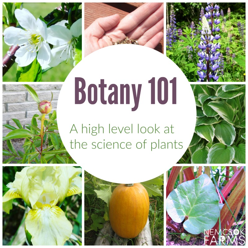 Basic Botany from the beginning