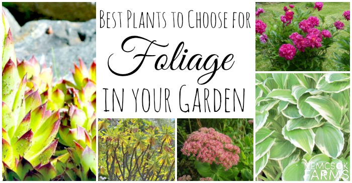 Choose these plants for foliage and more green space in your garden