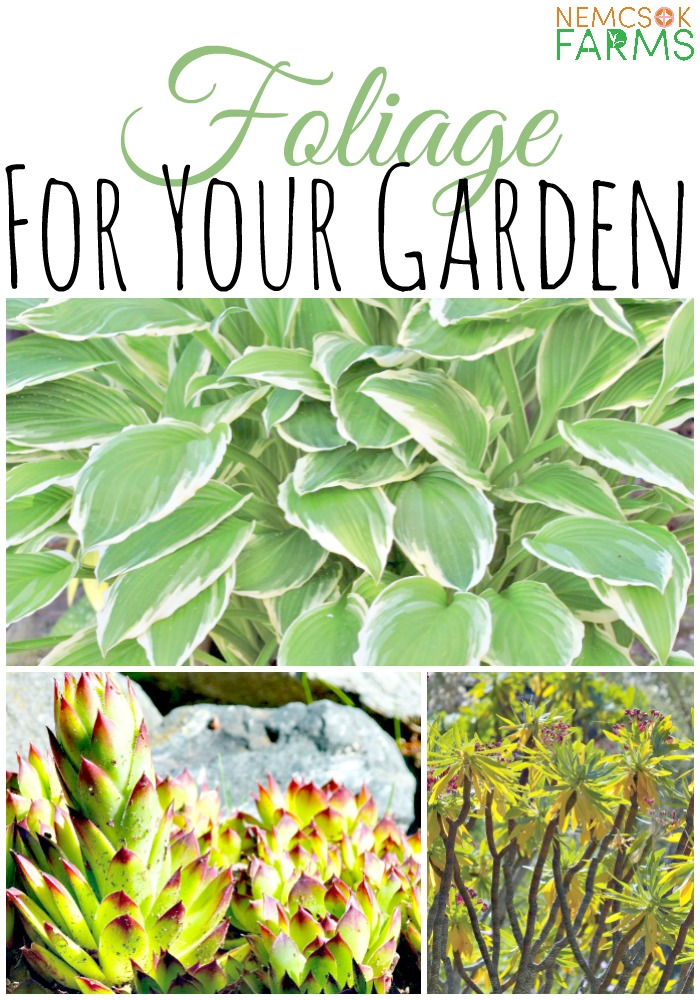 Best Plants to use for Foliage in your gardens