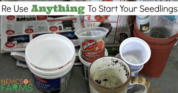 ReUse Anything to Start Your Seedlings post thumbnail image