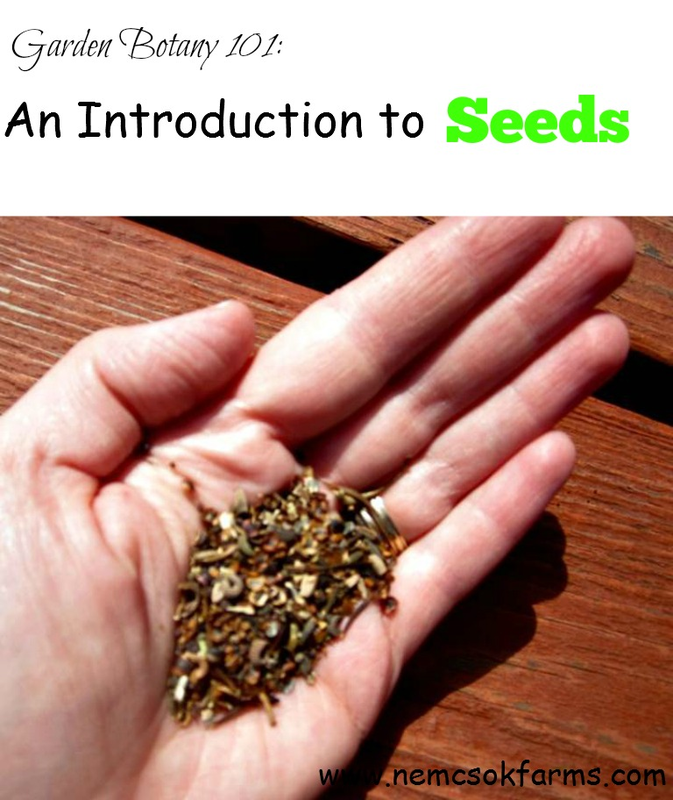 Garden Botany 101 - An Introduction to Seeds