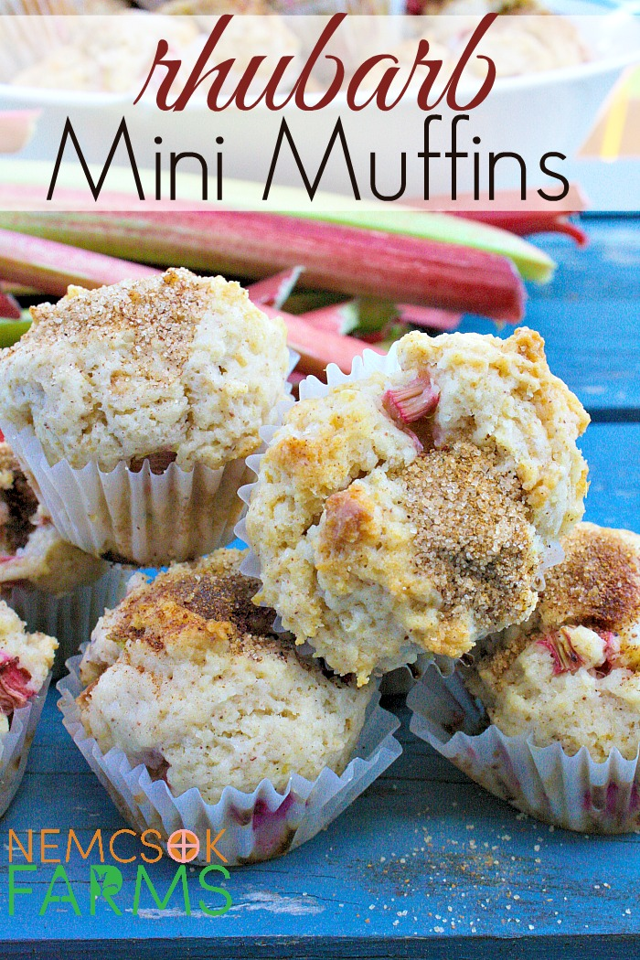 Mini Muffin Recipe made with fresh rhubarb and topped with cinnamon sugar make a great snack, and are super tasty!