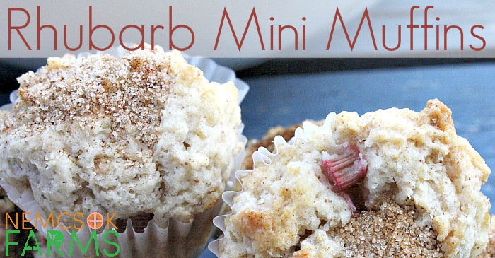Mini Muffins made with fresh rhubarb and topped with cinnamon sugar make a great snack, and are super tasty!