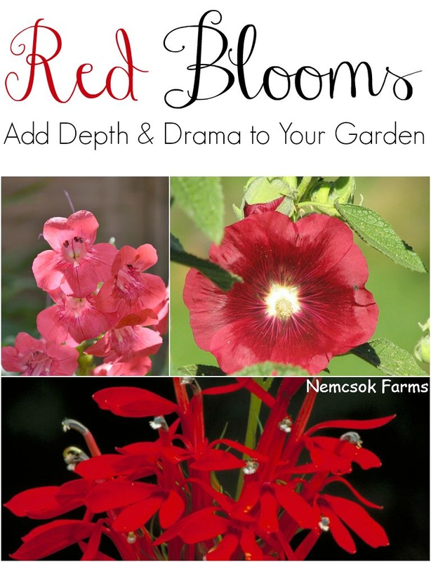 Warm up your fall gardens with blooms in red, orange and yellow. These fall bloomers provide depth and drama.