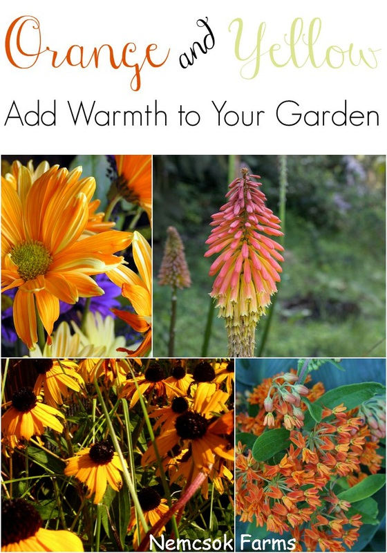 Warm Up Your Fall Garden with Fall Blooms in Oranges, Yellows and Reds.