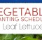 planting schedule and growing tips for lettuce