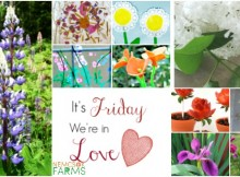 30 Plus Ways to Fall in Love With Flowers for your Garden, Your Craftroom, Classroom, and Your Lunchbox
