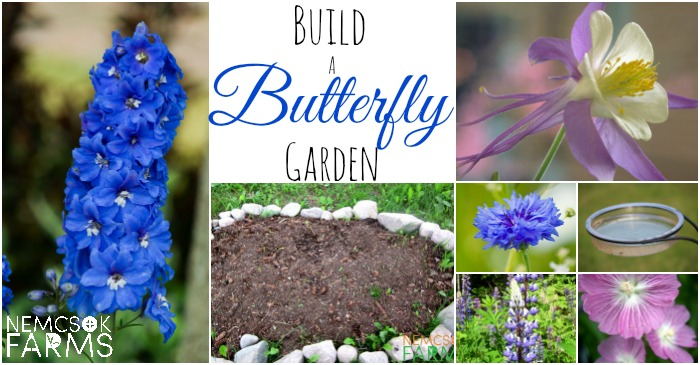 How To Build A Butterfly Garden with Flowers and Other Essentials for Butterflies