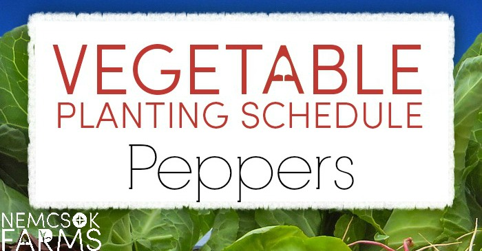 Vegetable Planting Schedule for Peppers post thumbnail image