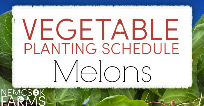 Vegetable Planting Schedule for Melons post thumbnail image