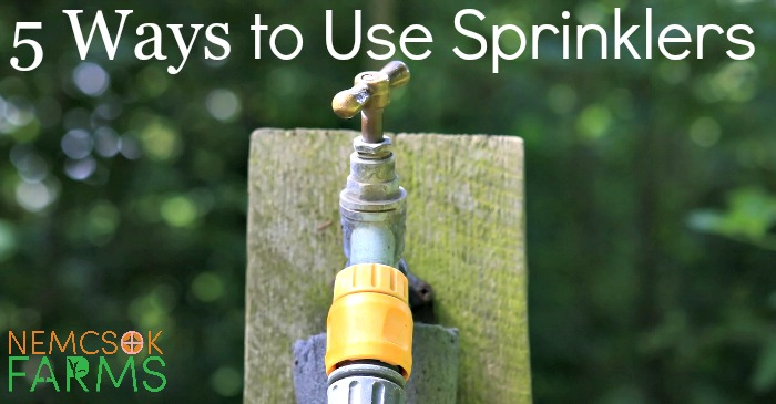 5 Ways to Use Sprinklers post thumbnail image