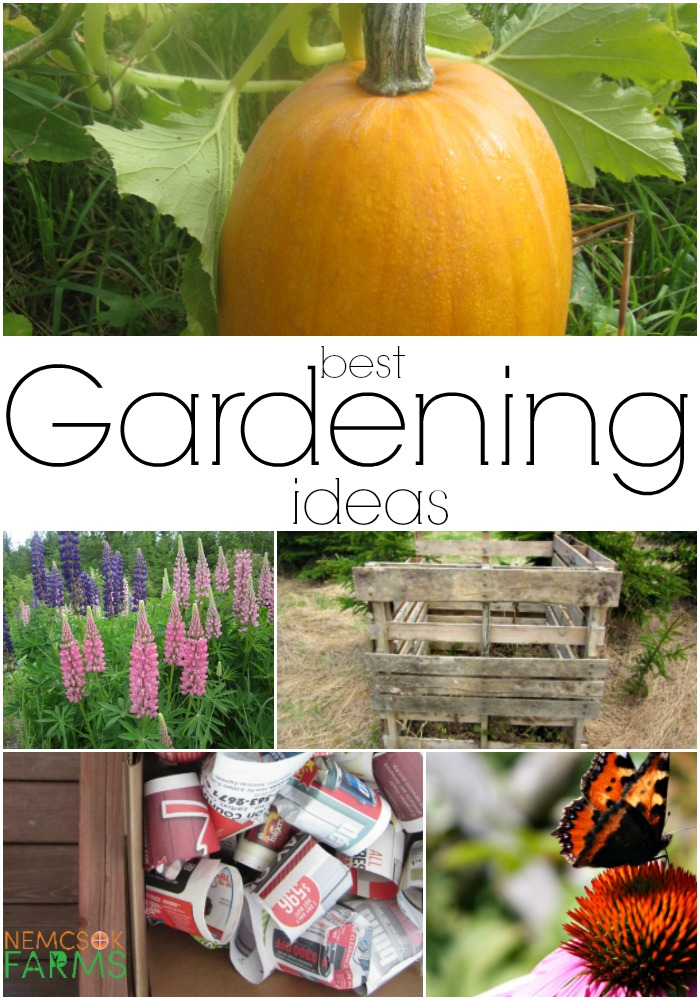 Best Gardening Ideas from Seed Starting and a Composter, to Butterfly Gardens and Vegetables