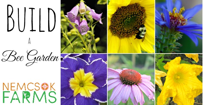 How to Build a Bee Garden post thumbnail image