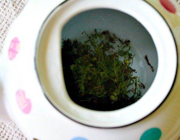 Wild Chamomile Tea Leaves