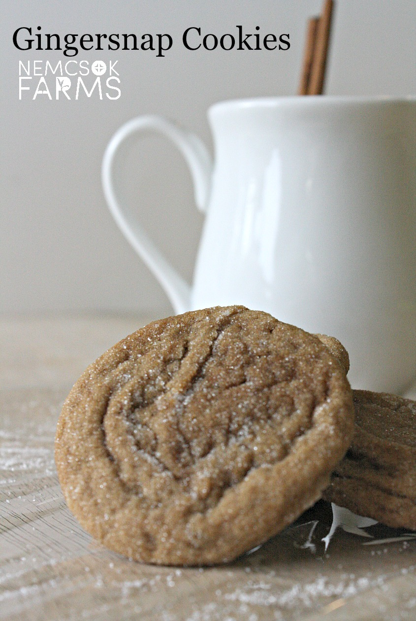 Homemade Gingersnap Cookie Recipe - a soft nostalgic favourite homemade cookie perfect for fall