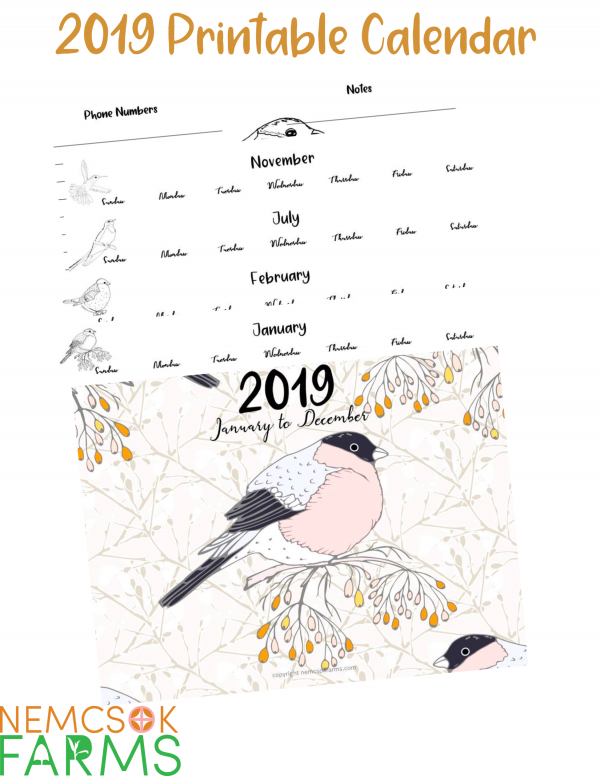 Printable 2019 Bird Sketch Calendar from January to December complete with an extra page for notes and phone numbers.