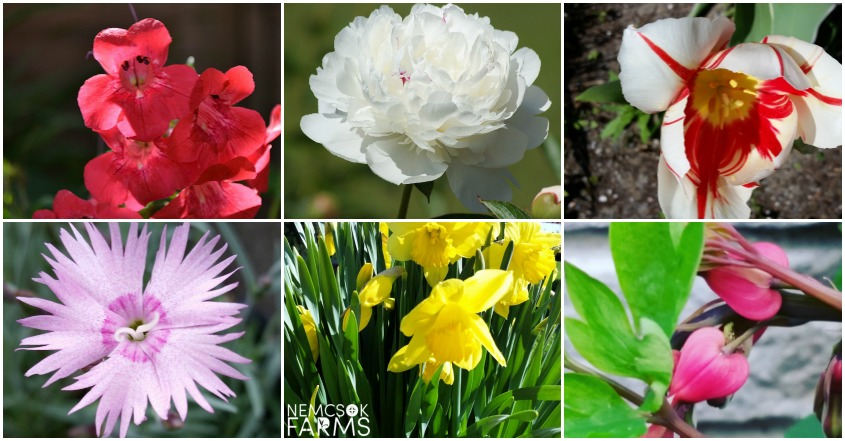 To help get a good dose of spring, early spring blooming flowers pack a big punch. Consider adding these to your gardens and walkways